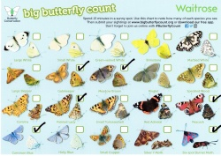 butterfly_ticked_chart_250