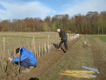 hedge_planting_magog_down_020_453