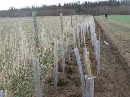 hedge_planting_magog_down_022_453